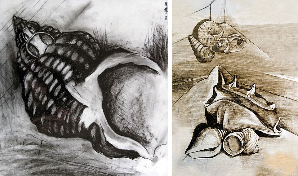 Shell drawings by Amiria Gale